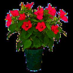 Fleurs de Bach pour les plantes - lesfleursdebach.fr