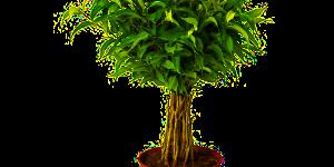 Fleurs de bach pour les plantes